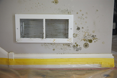 Mold Safety - Kitchen Inspection Tips